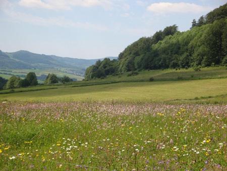 Blühende Wiesen am Feldberg
