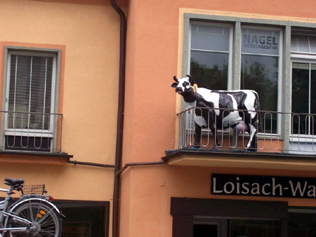 garmisch kuh auf balkon
