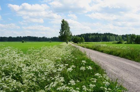 Wald- und Wiesenlandschaft in Finnland