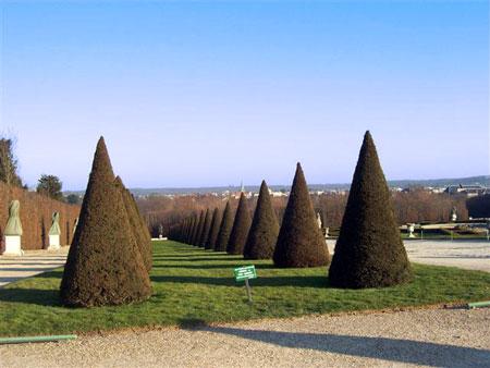 Akurat gepflegte Bäume im Park