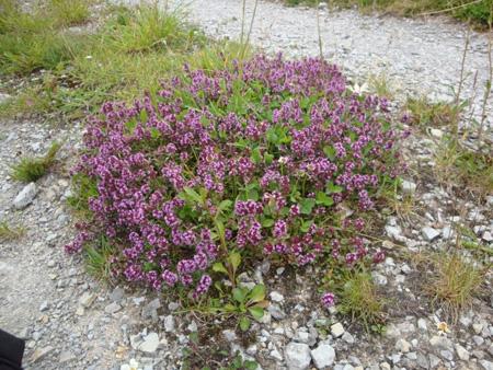 Wildblumen in Thüringen