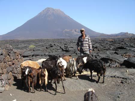 Kapverdianischer Ziegenhirt vor dem Vulkan Pico de Fogo