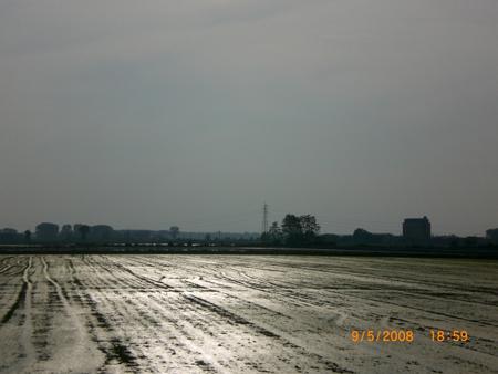 Reisfelder Abends