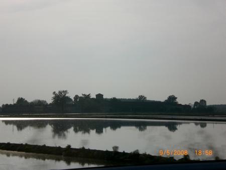 Reisfelder am Wasser
