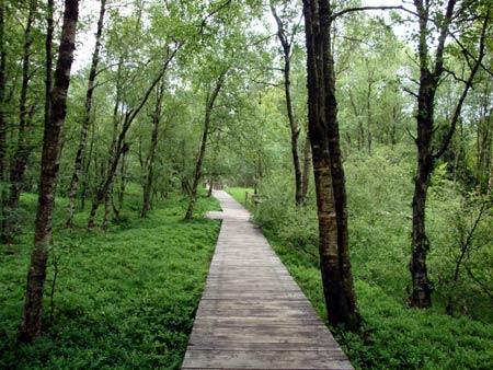 Das Rote Moor ist nur auf Holzstegen zu begehen