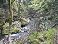 Wilder Fluss im Bayerwald - Bayrischer Wald