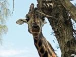 Pauschalreisen nach Kenia