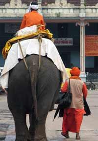 Tempel Elefant