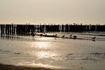 Ferienwohnungen Nordsee