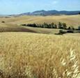 Landschaft Toskana, Italien