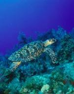 Urlaub auf den Cayman Inseln
