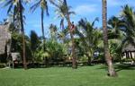 Tonga Hotels