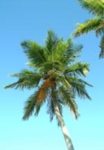 Palmen im Urlaub am Strand, direkt am Meer