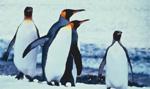 Rundreisen durch die Antarktis