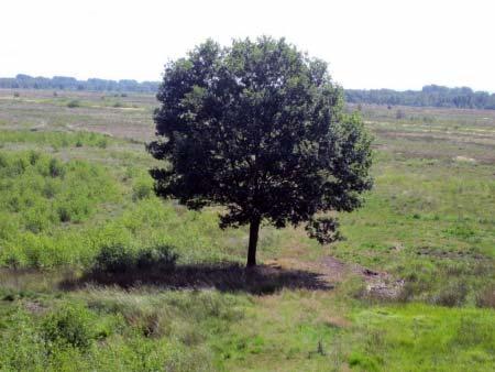 Baum im Tormoor