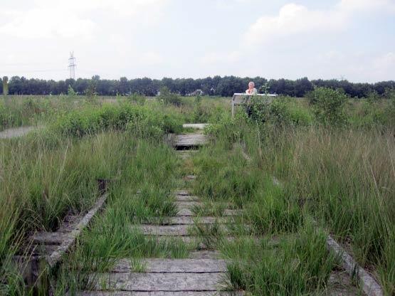 Bohlenweg übers Moor