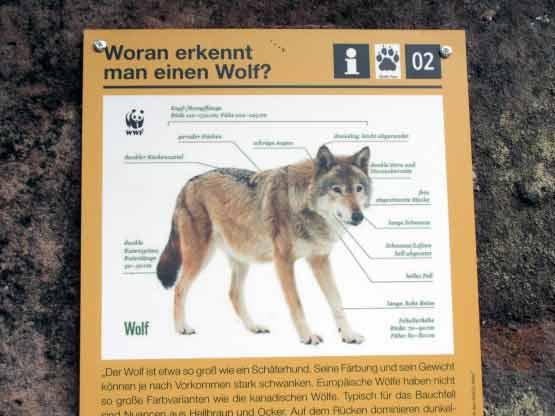 Der entdeckte Wolf