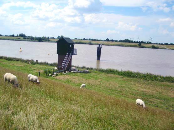 Ems - Schafe am Deicht