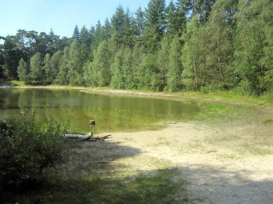 See im Klosterwald von Hesel
