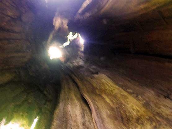 Im Innern des hohlen Baumes