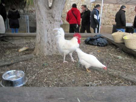 Hühner freilaufend