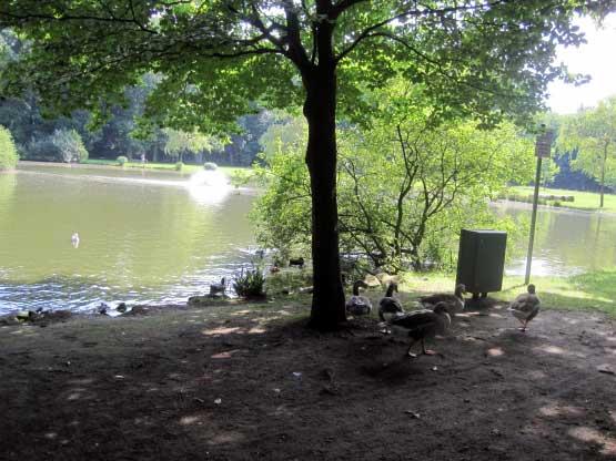 Julianenpark, Enten füttern gehört auch zum Urlaub