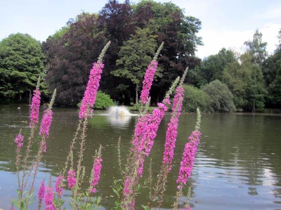 Julianenpark Teich
