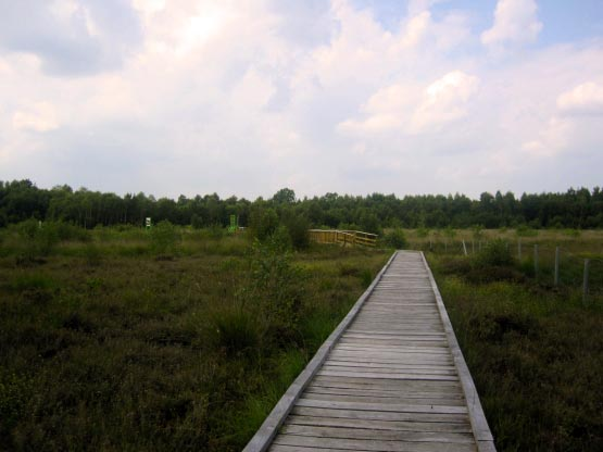 Holzbohlenweg durchs Moor
