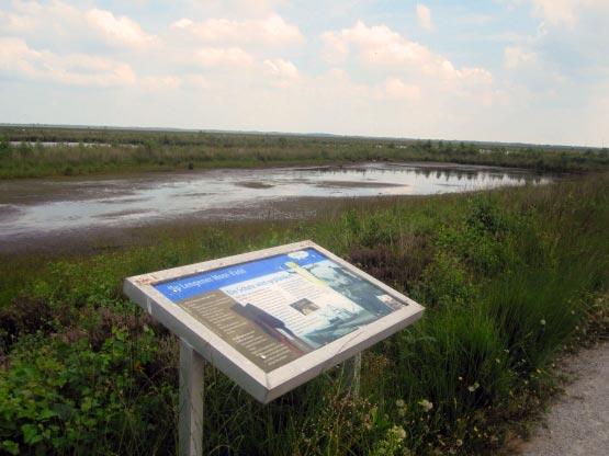 Schautafeln beschreiben das Moor