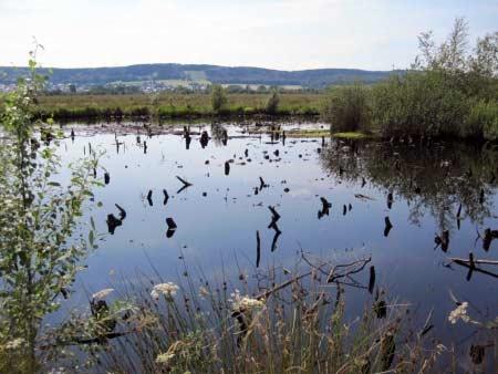Moorsee Lübbecke