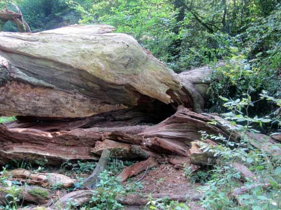 Das Holz zerfällt allmählich.