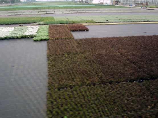 Pflanzentöpfe kilometerweit am Niederrhein