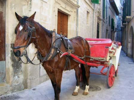Pferd Kutsche