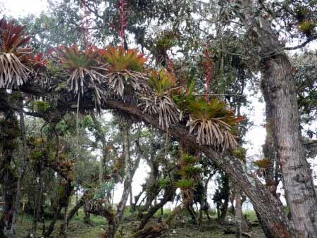 Regenwald in Kuelap