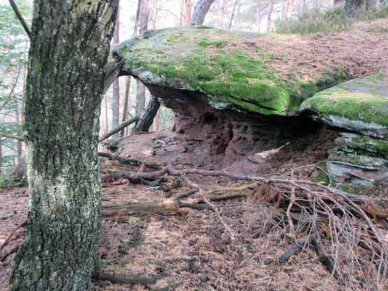 Bizarre Felsen im Wald