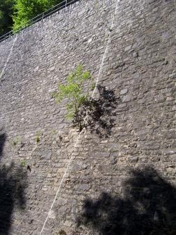 Serpentinenmauer Manderscheid