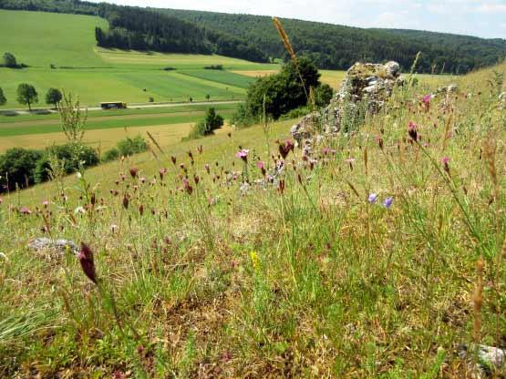 Blumenhang am Burgstall