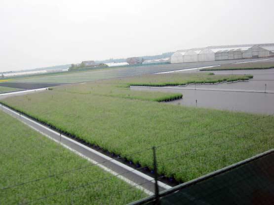 Felder mit Blumen und Pflanzen