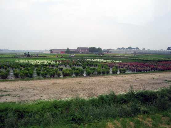 Blumenfelder Straelen