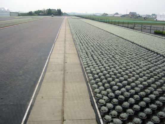 Pflanzen in Kunststofftöpfen