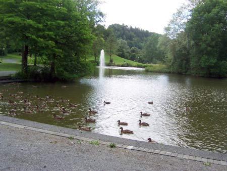 Teich Kurpark Daun