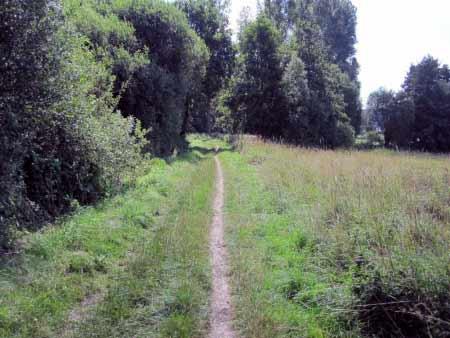 Pfad durch Torfmoor