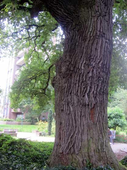 Westerstede Park