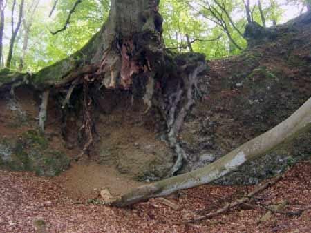 Wurzeln Baum